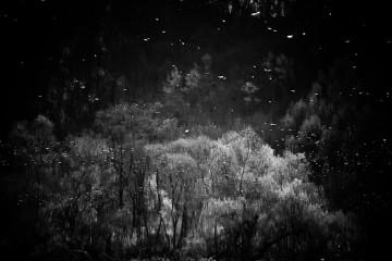 reflection dark forest
