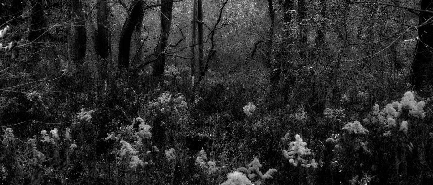 forest dramatic dark scenery