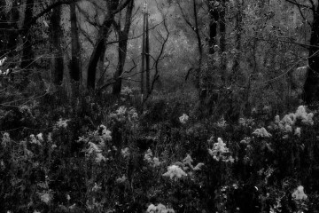 forest dramatic dark scenery