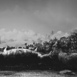 dead Komodo dragon